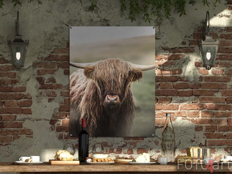 Tuinposter - Schotse hooglanders