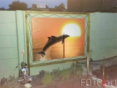 Foto op Tuinposter Dolfijn