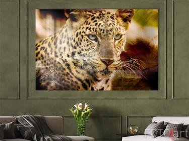 Luipaard op plexiglas