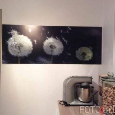 Foto op geborsteld aluminium Paardebloemen