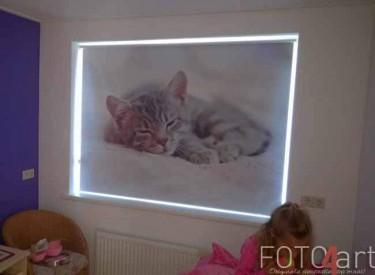 Fotorolgordijnen kinderkamer Kat