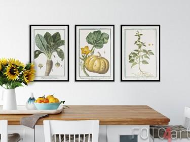 Ingelijste posters met botanische illustraties